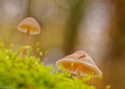 Nature-Champignons-0194-7279-2