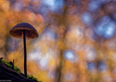 Nature-Champignons-0194-7513-2