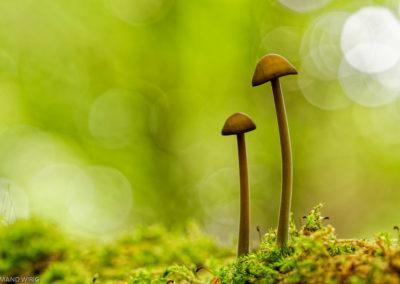 Nature-Champignons-0194_-_DSC3165DXO-2
