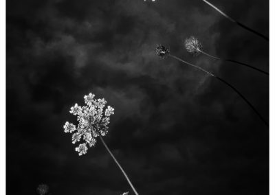 Noiretblanc-Autres-0123_fleurs16_-2