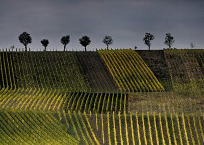 couleur-Paysage-0123_vignes2-2
