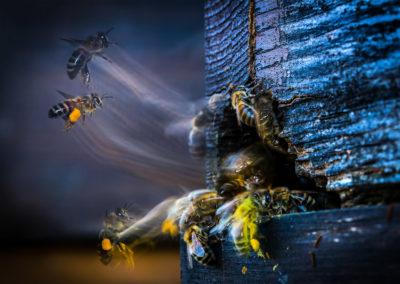couleur-autres-DEL_BIANCO_Gianni_001_abeille-2