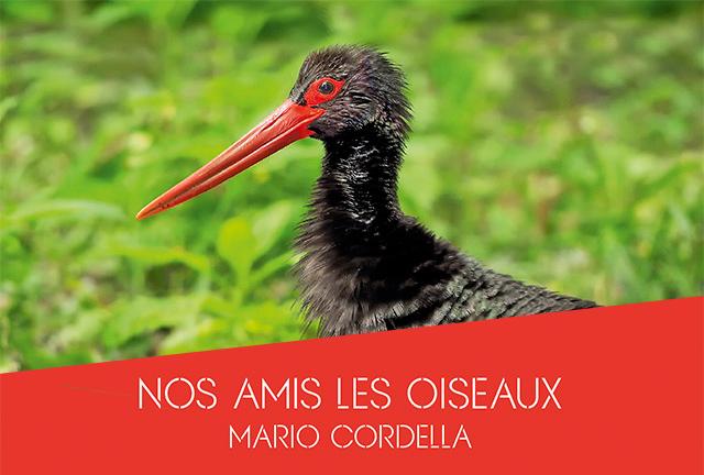 Mario CORDELLA expose à Illange – mars 2020